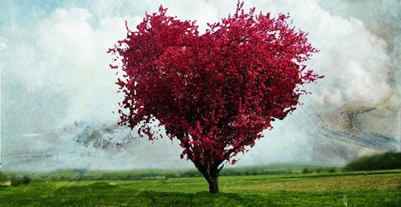 El amor dentro de un hueco El amor dentro de un hueco bonsai2